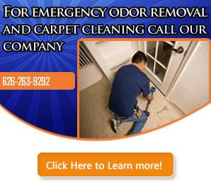 Blog | When Carpet Cleaning is Needed Daily